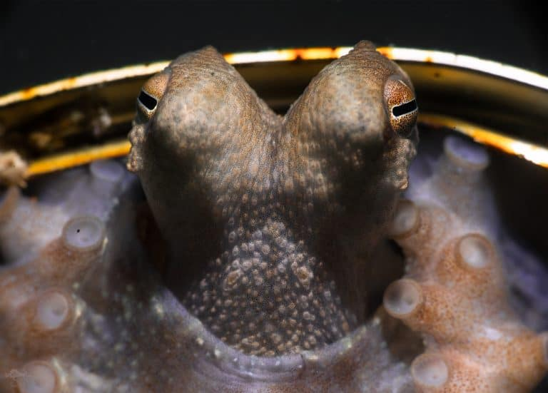 Backyard Aliens? How Octopuses Are Portrayed In Science Fiction!