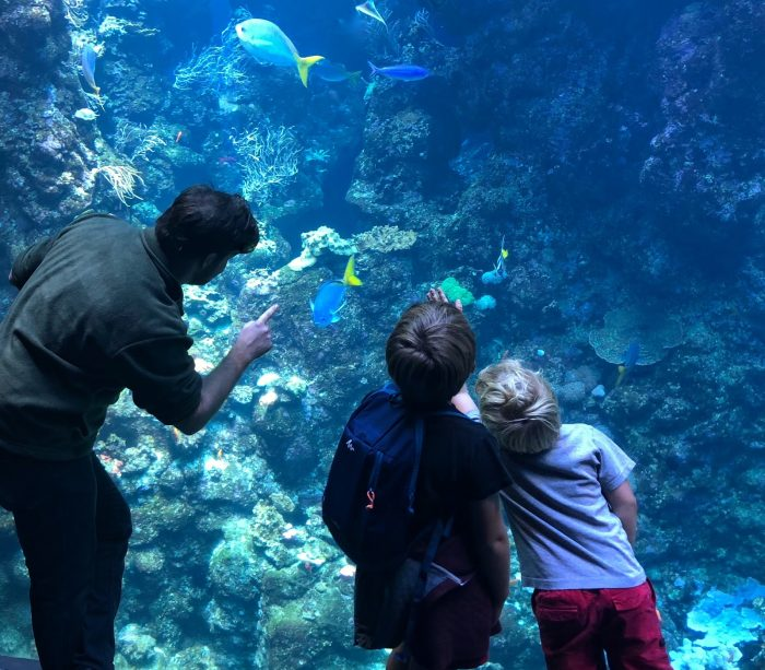 man and young kids observing an aquarium tank